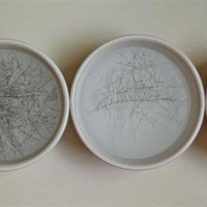 Nirit Mitrany, Untitled, 2004, rapidograph on polypropylene, bowls in water) d13 each