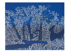 trees in blue, monotupe