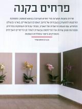 פרחים בקנה_ דוד עדיקא
