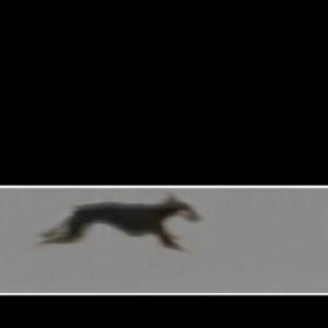 ריצה - בנתור אשרת הלן, 2004 , וידאו