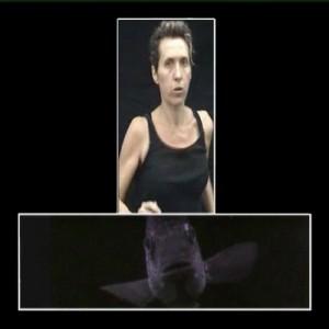הדג - בנתור אשרת הלן, 2004 , וידאו