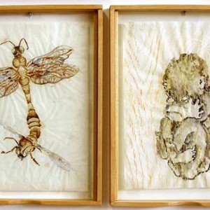 Miri Nishri, Beehive, 2007, coffee, acrylic paste, ink and watercolor on tracing paper woth wood frottage 50X40