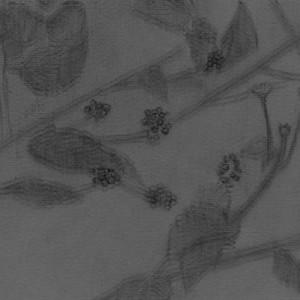 נועה זית, ללא כותרת (לנטנה אפורה), 2007, הדפסת דיו 22.5x18