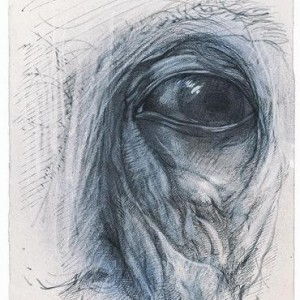 Sidon Rothenberg, Topography of a Face, 2007, pen and chalk on paper 38x28.5