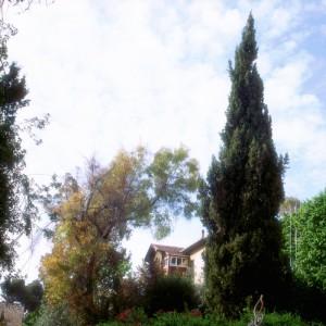 """נוף כלפי מעלה 1# - סגורסקי גוסטבו, 2006 , הדפסת למבדה, 102x102 ס""""מ"""