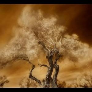 """שורשים 6# - פרידמן אלעד חגי, 2009 , הדפס סימבוליק, 55X40 ס""""מ"""