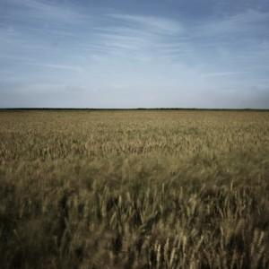 wheatfeild - Abitbul Dudu,  2005, digital photography