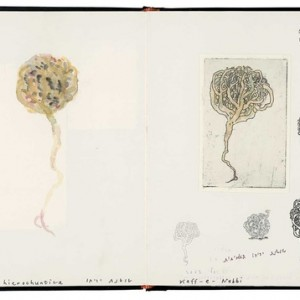 """Larry Abramson, Rose of Jericho, from the """"Book of Ruin"""", sketchbook 2002-2004, Collage, etching, watercolor, pencil and ink on paper 24.5x34 cm"""