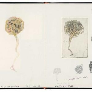 """לארי אברמסון, שושנת יריחו, מתוך """"ספר החורבן"""", ספר מתווים, 2002-2004, הדבק, תצריב, צבעי מים, עיפרון ודיו על נייר 34X24.5 ס""""מ"""