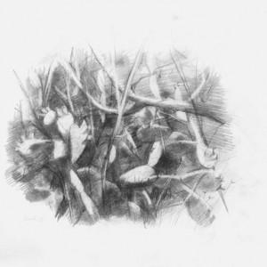 """אילן ברוך, משוכת צבר, 2009, גרפיט על נייר 35X27 ס""""מ"""