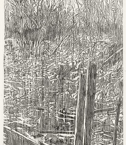 Orit Hofshi, Thicket, 2008, Rubbing with oil pencil on paper 180x84 cm