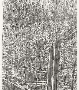 """אורית חופשי, סבך, 2008, שפשוף בעיפרון שומני על נייר 84X180 ס""""מ"""