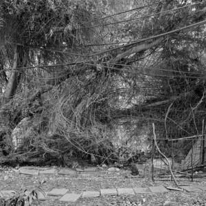 שרון יערי, סבך, 2009, הדפס הזרקת דיו 196X154
