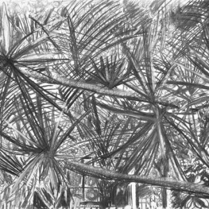 """אורי סיני, בלא כותרת, 2008, פחם על נייר 70X50 ס""""מ"""