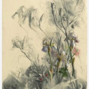 """סיגל צברי, יער זעיר, 2007-2009, עיפרון, פחם ופסטל על נייר 48.3X66.5 ס""""מ"""
