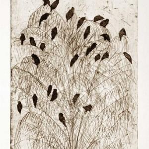 """רות טל, ציפורים בצמרת מס' 2, 2010, תחריט יבש, שעווה רכה ואקווטינטה על נייר 37X50.5 ס""""מ"""