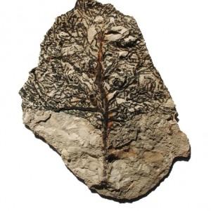 """מרב דביש בן-משה, """"מרשרשים עצי זהב ביובש מוזר"""", (מתוך השיר """"כל כך משחר הלילה"""" מאת חביבה פדיה), 2007, דיו על קליפת בטון 15X21 ס""""מ"""