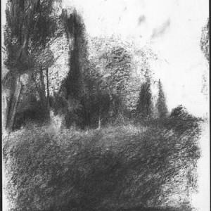 Eldar Farber, Cypress at the Yarkon, 2001, charcoal on paper 32x24 cm
