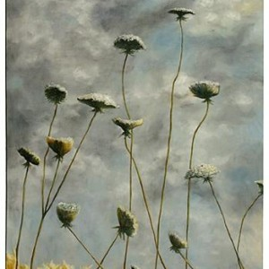 """Queen Ann's Lace and Cloudy Sky"",  39.6 "" X 27.5"""