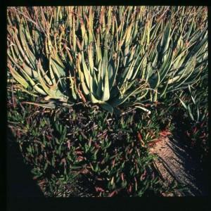 צמחייה ים תיכונית - עברון אסף, 2006 , הדפס למבדה בקופסאות אור