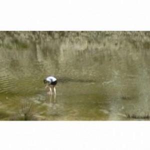 סיטי סנטר - שמיים תחתונים - בן-חיים יולזרי חנה, 2007-2008, וידאו, 3 דק'