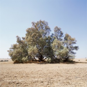 Naomi Lleshem, Tom, from the series Centered, 2012, Pigment print on archival paper, 92x92 cm