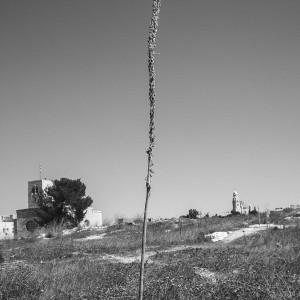 עליזה אורבך, חצב, מתוך שיר על הארץ, 2014